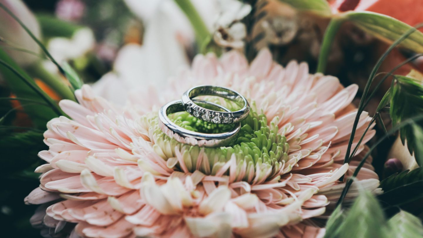 close up photography of silver-colored wedding rings on pink gerbera daisy flower
